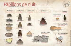 Le De Nuit by Compte Rendu Soir 201 Es Papillons De Nuit Les Amis Du