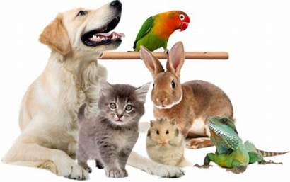 Veterinary Pet Careers Exotic Vet Animals Pets