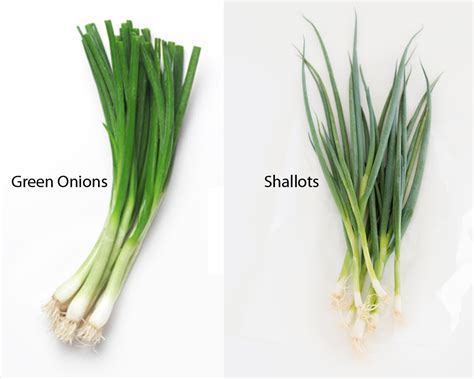 what are shallots green onions vs shallots thosefoods com