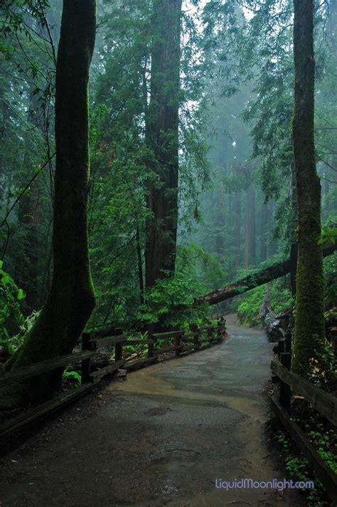 redwoods john muir woods  rain forest   part