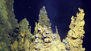 The ancestor of all known life was a microbe that ate ...