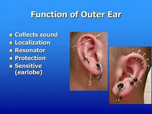 Ppt - Anatomy Of The Ear Powerpoint Presentation
