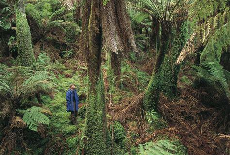 Australia's Rainforests Aussie Specialist Program