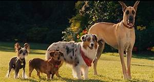 The, Great, Debate, Mixed, Breed, Vs, Purebred, Dogs