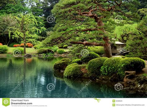calm zen lake  bonzai trees stock  image