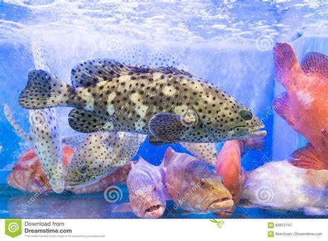 grouper fish tank aquarium restaurant preview