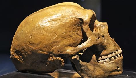 deaf injured neandertal survived    friends