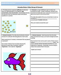 22 Best Images About Amoeba Sisters Handouts On Pinterest