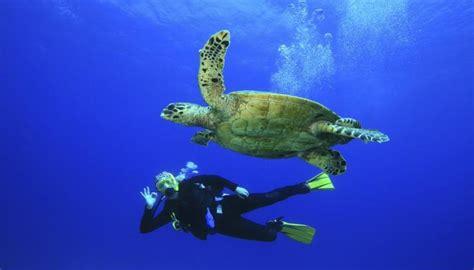 wildlife swimming biology sea synonym side schools diver turtle