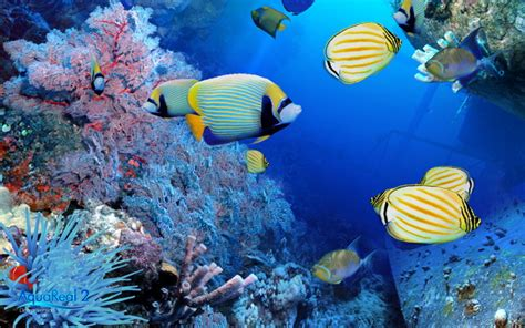 tropical fish and beautiful windows 8 wallpapers themewallpapers free hd wallpapers