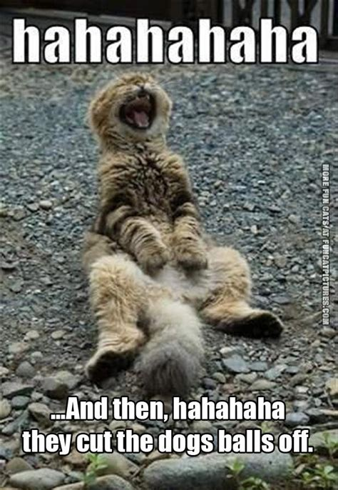 Hysterical Laughing Meme - ball archives fun cat pictures