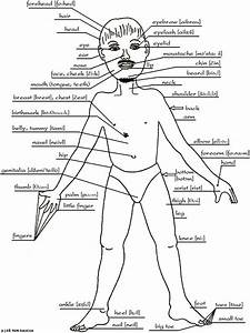 Parts Of Human Body Images