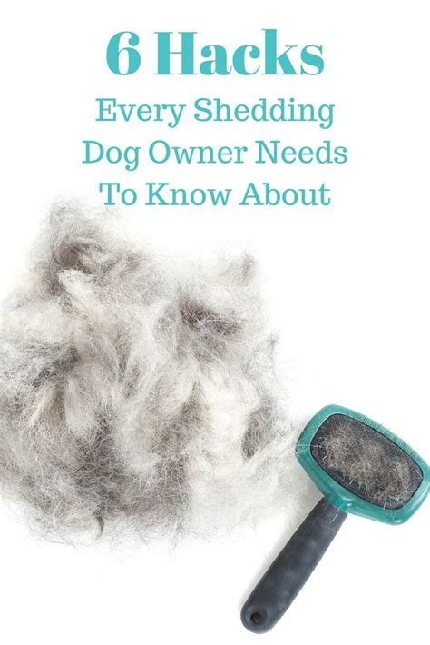 Home Remedies For Shedding Dogs by 25 Best Ideas About Shedding On Non