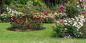 Blumen Für Steingarten : inselbeet anlegen bepflanzen und gestalten ~ Markanthonyermac.com Haus und Dekorationen