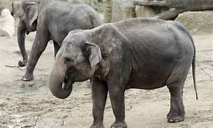 Elephant dung at Prague Zoo morphs into a new form: paper ...
