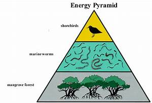 Ecological Pyramid Of Energy | www.pixshark.com - Images ...