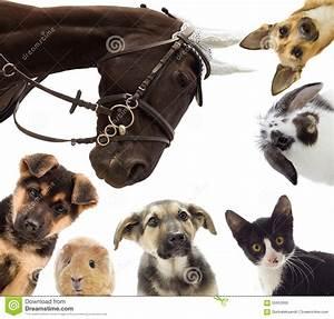Mehrere Bilder In Einem : groupe de diff rents animaux familiers image stock image ~ Watch28wear.com Haus und Dekorationen