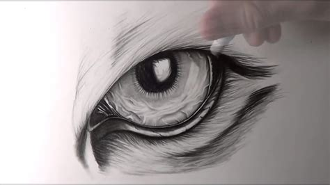 draw tiger eyes animal drawings  youtube