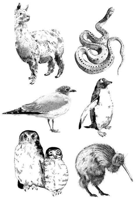 animal illustration emilywalliscom