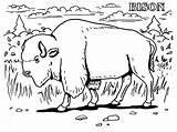 Kolorowanki Bizon Petani Pobrania Lembar Mewarnaigambar Bestcoloringpagesforkids Binatang sketch template