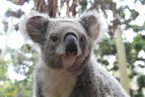 Koalas & Wombats & Wallabies, Oh My
