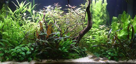 d 233 cor de fond aquarium eau douce encombrement place