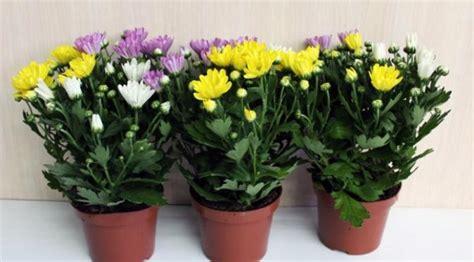 tanaman hias mampu bersihkan udara rumah