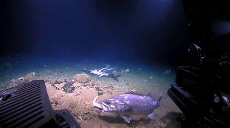 grouper shark whole borninspace eats