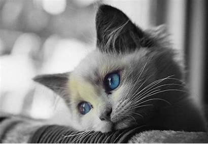Sad Wallpapers Cat Cave