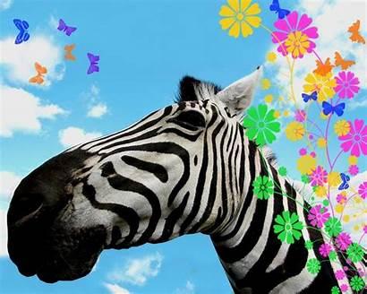 Zebra Wallpapers Desktop Animal Rainbow Background Animals