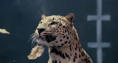 jaguar  eat mercedes  breakfast literally video