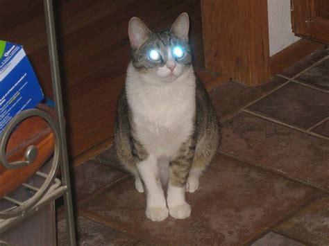 staring cats  laser beam eyes love meow