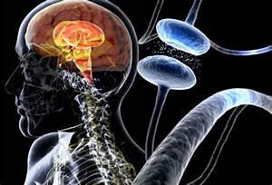 Parkinson's Disease: Symptoms, Causes, and Treatment
