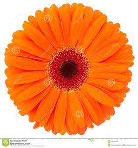 white bouquet orange flower stock photos image 19524563