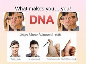 What types of inherited genetic traits are described in ...