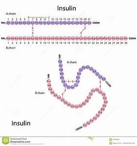 metabolisme ziekte