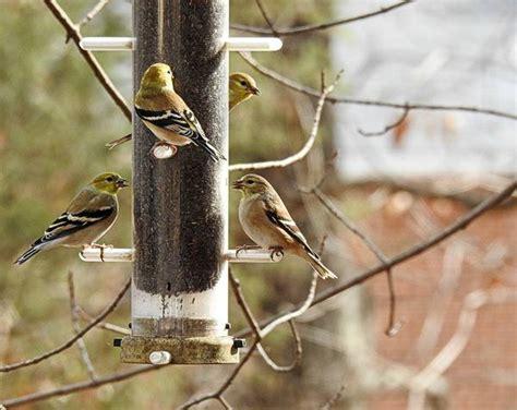 do squirrels eat nyjer seed a seed squirrels won t eat birdseed binoculars