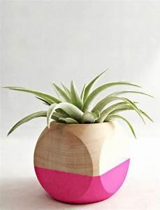 decorez avec les plantes grasses d39interieur With tapis chambre bébé avec plante a fleur d intérieur