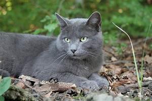 lost grey cat - Michigan Humane Society