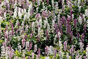 Stauden Für Den Schatten : schattengarten anlegen beliebte schattenpflanzen und schattenstauden ~ Sanjose-hotels-ca.com Haus und Dekorationen