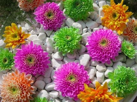 Check spelling or type a new query. Beautiful flowers wallpapers and images - wallpapers ...