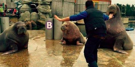 zookeepers  hilariously recreating chris pratts raptor