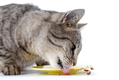benefits  digestive enzymes  cats