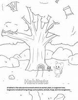 Coloring Habitats Preview Reading sketch template