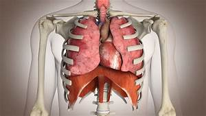 Human Internal Organ Stock Video Footage