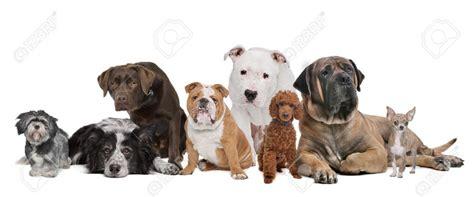 hundetrainer verhaltenstherapie hund hundefuehrerschein