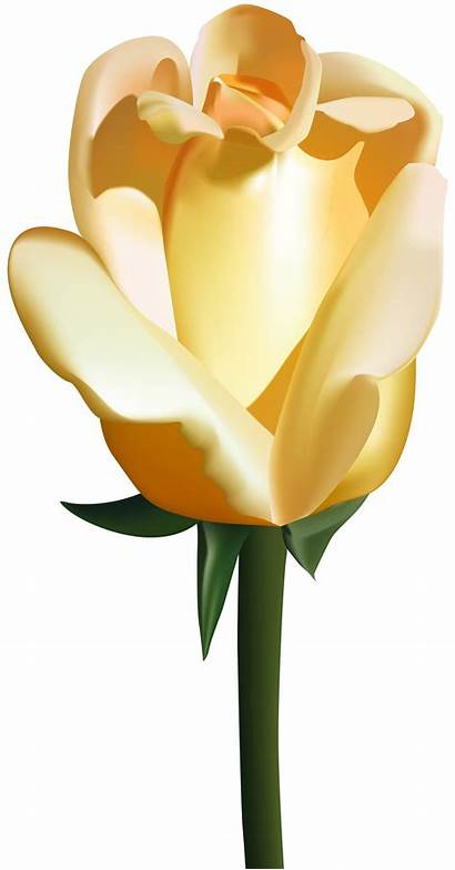 Yellow Rose Clip Clipart Roses Yopriceville Transparent