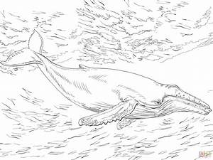 Diving Humpback Whale Coloring Page Free Printable
