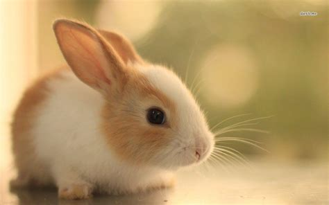 Bunny Background Bunny Wallpapers Wallpaper Cave