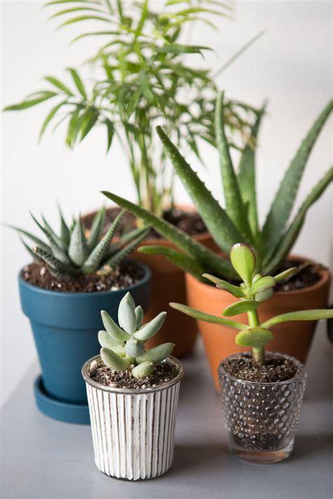 Indoor Plants Blooms Productivity in Business - Homes